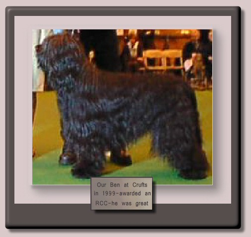 Ben the Champion Starwell Briard at Crufts